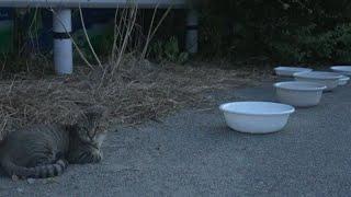 Cat Live エサやりさんからエサをもらったさくらねこたちをライブ配信 野良猫 感動猫動画