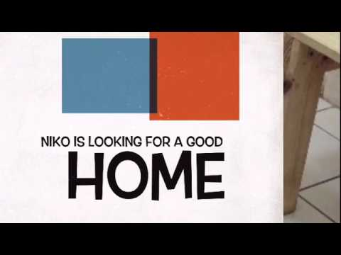 NIKO NEEDS A GOOD HOME US FOR PAWS INC
