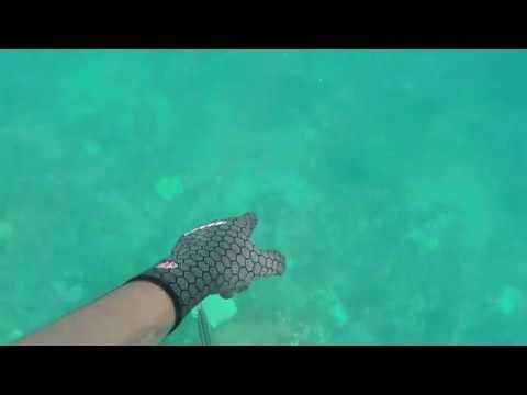 Spearfishing Broome WA