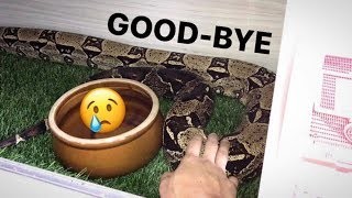 My BIG SNAKE, Bella is GOING AWAY ~ Here's why ..
