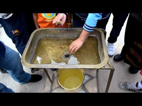 Azules en Quito, en la Real Linea del Ecuador - Experimento agua en el centro del mundo.