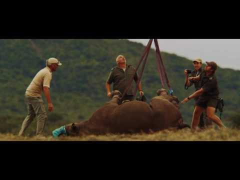 Giving our rhinos a lift - WWF