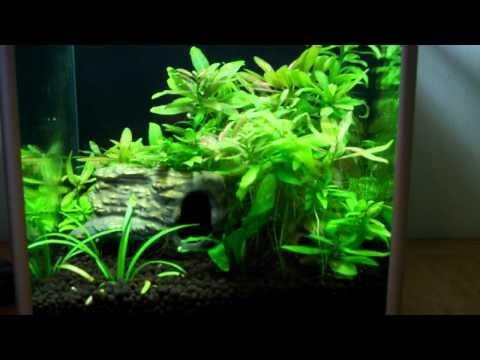 Home aquarium YouTube