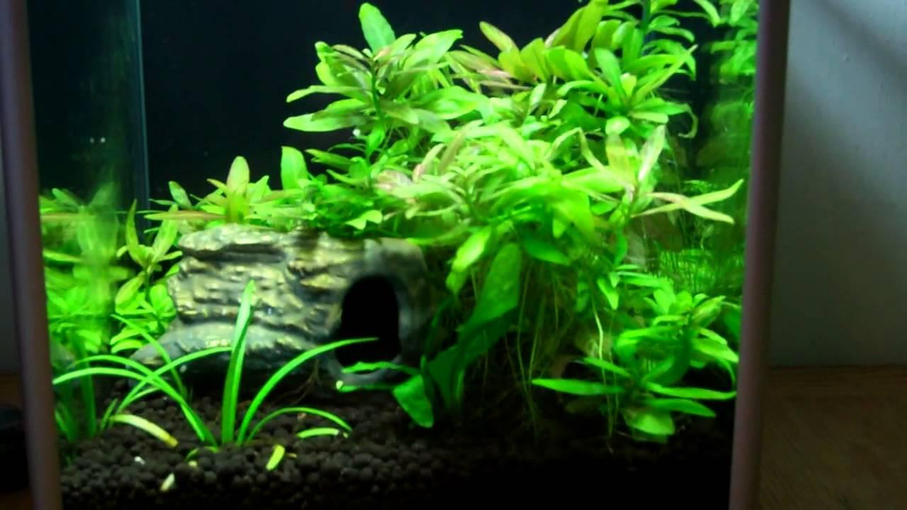 Aquarium Plant Care