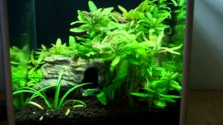 Aquarium Plant Care Guide