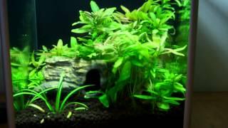 Aquarium Plant Care Guide