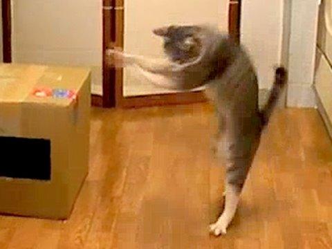 Thumbnail for Cat Video Dancing Cat