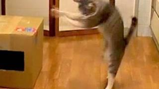 箸が転げても可笑しいお年頃。(生後10ヶ月頃の映像) モアクリ http://moacrie.com/ https://twitter.com/moacrie https://www.facebook.com/moacrie #猫.