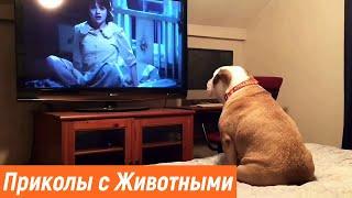 Новые приколы про животных Смешные животные Видео с животными