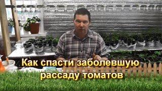 Как спасти заболевшую рассаду томатов(, 2016-04-14T19:12:11.000Z)