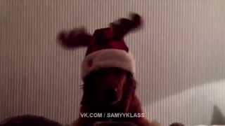 Собака в прикольной шапке