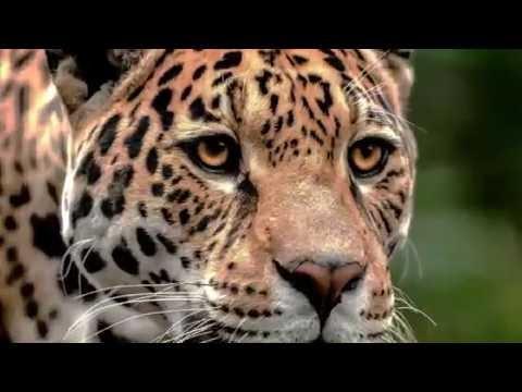 JUMA - Kennedy Fialho (Clipe Oficial em HD)