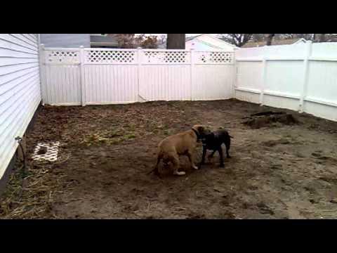 Dog Breeding Half Brother And Sister