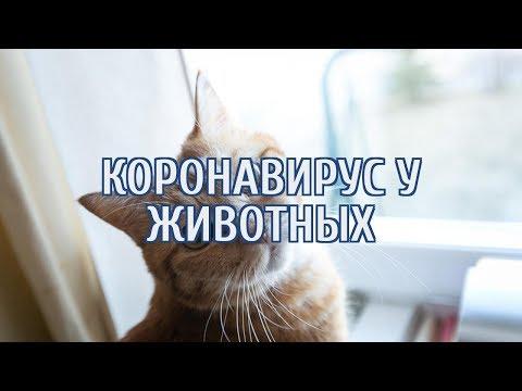 🔴 Кошки начали болеть коронавирусом
