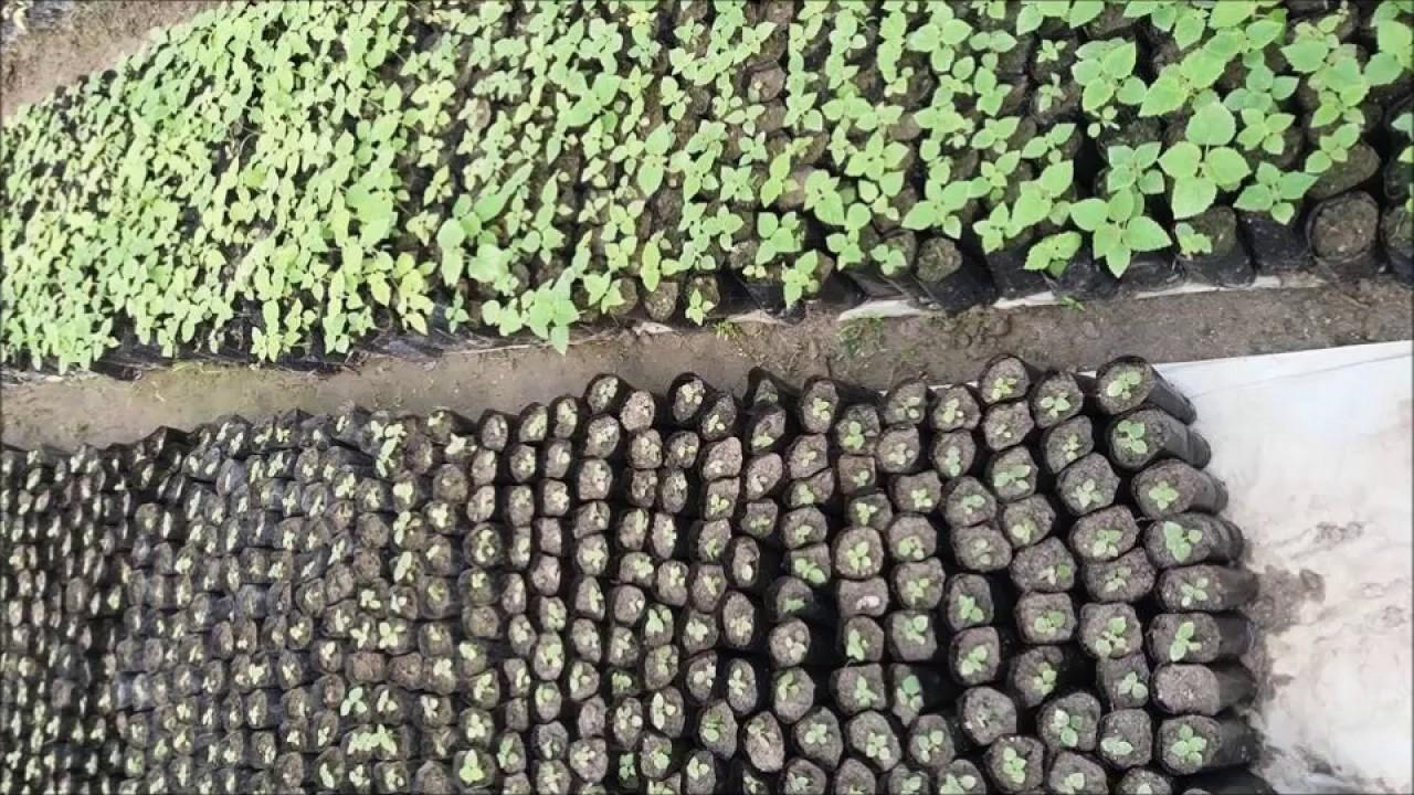 Plant Nursery Green Economy Nepal