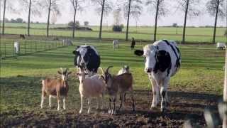 Découverte d'un petit coin de paradis, sanctuaire pour les animaux de ferme