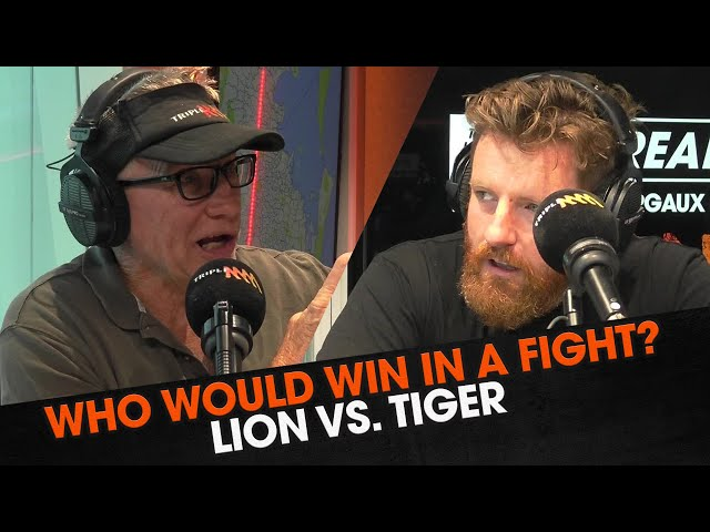 Lions vs. Tiger - Who Would Win a Fight? | Triple M