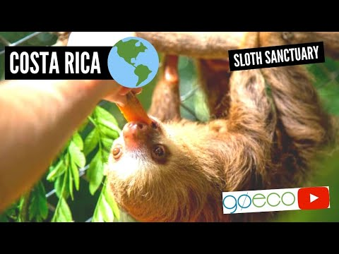 Costa Rica - Animal Rescue and Conservation