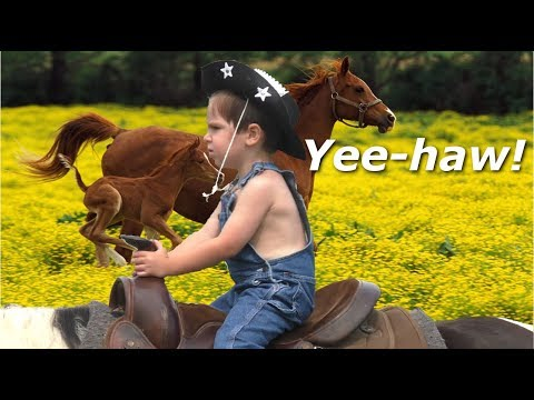 Horses for Toddlers.  Kid Cowboys Ride Ponies and Play Farm.