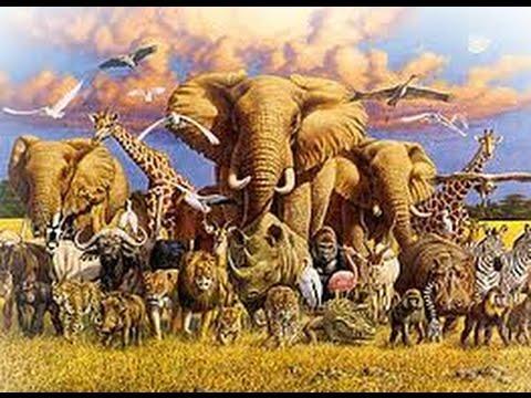 Тварини  Різноманітність тварин у природі