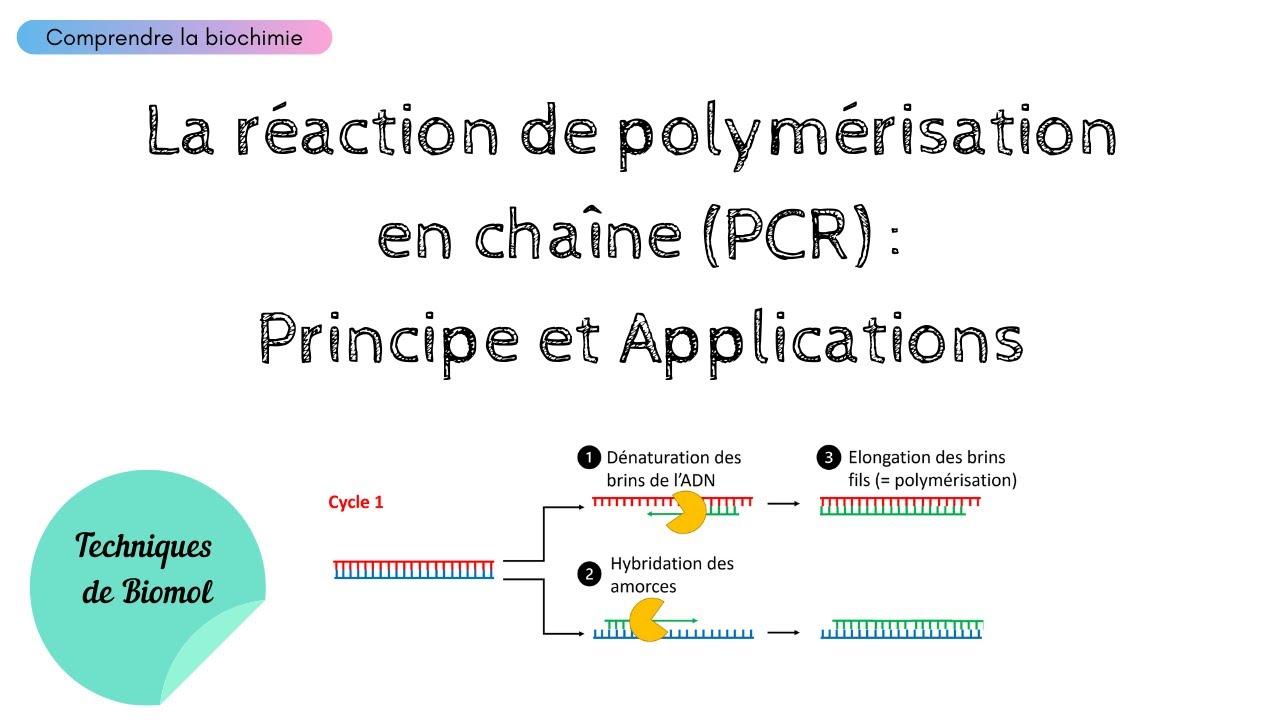 Download C'est quoi la PCR ? Principe et Applications   Biochimie Facile