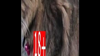 LION USED AS SEX SLAVE - Xerxes سكس حيوانات ـ