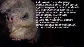 9 видов животных, вымерших за нашу жизнь!