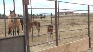 Mustang Mare Tries to Steal Foal