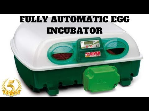 Small/Mini Size Egg Incubator Fully Automatic By River Systems For Hatching Different Birds Eggs