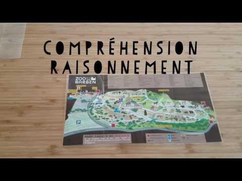 [Vidéo 2] [Rééducation] Un autre regard sur l'usage du plan d'un zoo en orthophonie