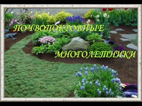 Почвопокровные многолетние цветы. Многолетники фото названия.