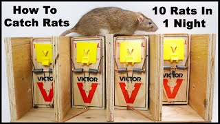 The Best Way To Trap Rats. The Ultimate Rat Trapping System. Mousetrap Monday