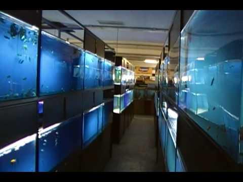 Exotic Aquarium Sacramento Ca