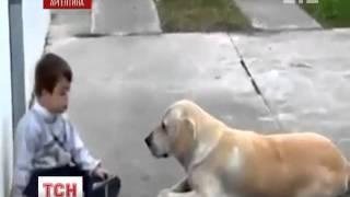 Как подружились больной мальчик и собака