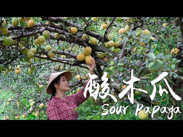 酸木瓜——我心目中的酸果之王【滇西小哥】