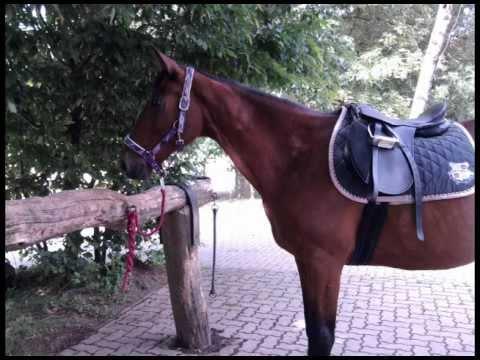 Ashanti-Ein Pferd das es nur einmal gibt:)