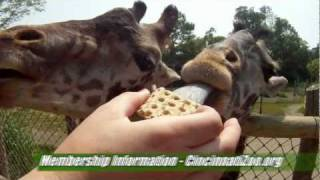 Zoo Membership Benefits - Cincinnati Zoo