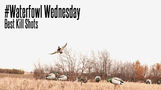 The Best Waterfowl Kill Shots: Waterfowl Wednesday