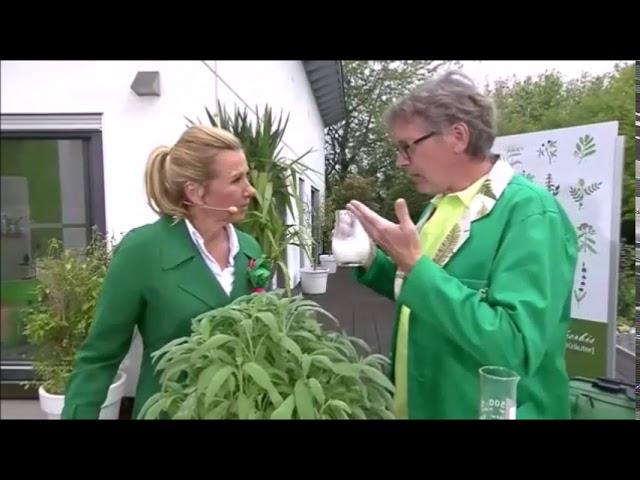 ZDF-Fernsehgarten: Mehltau mit natürlichen Mitteln bekämpfen