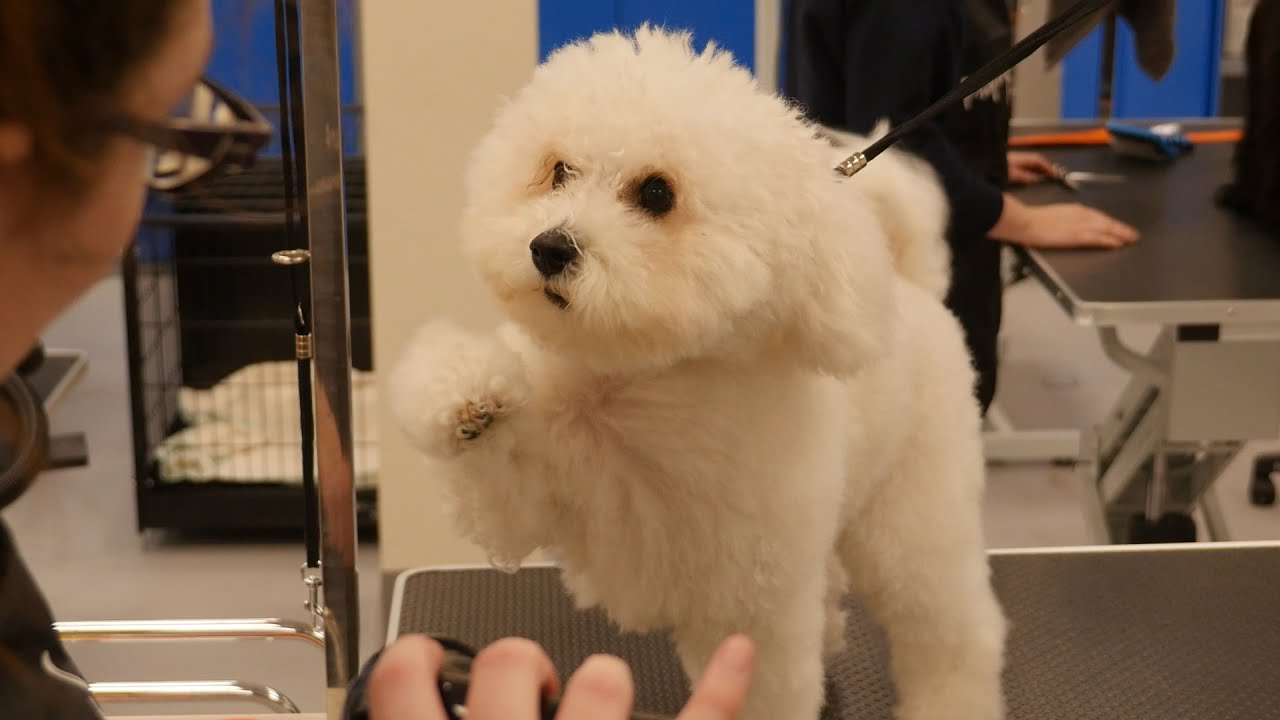 17 Best images about Dog Grooming: Cute Teddy Bear Heads ... |Dogs Grooming