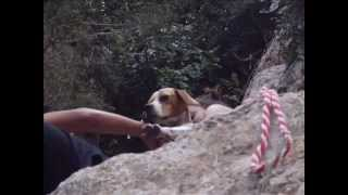 Dog Starved to the Point of Death Get Rescued from a Deep Crater