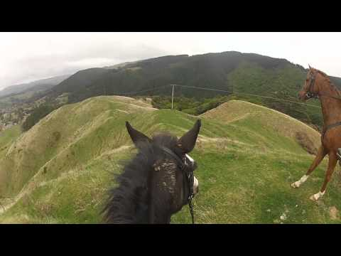 A fun day out at Battle Hill - New Zealand