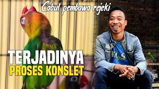 Download lagu LOVEBIRD SEMPAT TAK TERURUS JUSTRU PEMBAWA REZEKI
