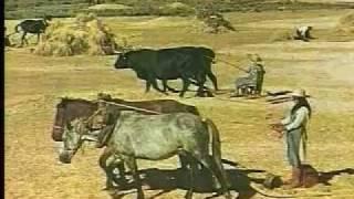 Edad Media: agricultura