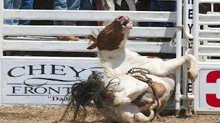 Video Rodeo Horse Cruelty download MP3, 3GP, MP4, WEBM, AVI, FLV Juli 2018