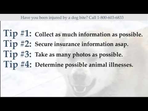 Alaska Dog Bite Lawyer (800) 603-6833 Assistance and Advice