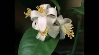 Aadithyan Titus Rise Of The Sun Плачущие цветы