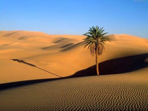 Kajian 3 Menit: Kisah Pohon yang Menangis - Ust Abu Zubeir,Lc   Menggugah