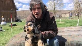 Puppy Report :  House Breaking @ 12 weeks