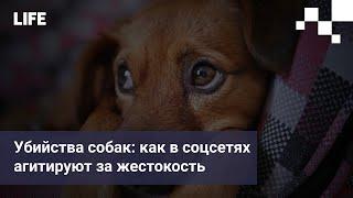 Убийства собак как в соцсетях агитируют за жестокость